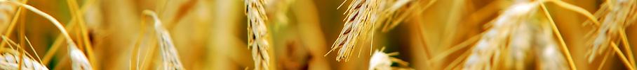 commercialisation céréales